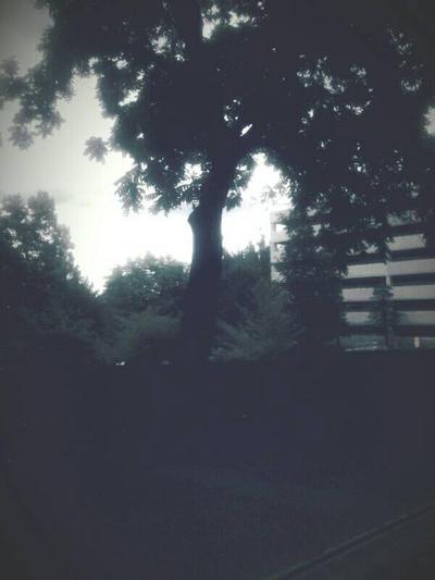 Greenery by TrappedInMyDaydreams