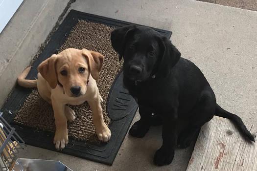 Puppy Bear and Sunny