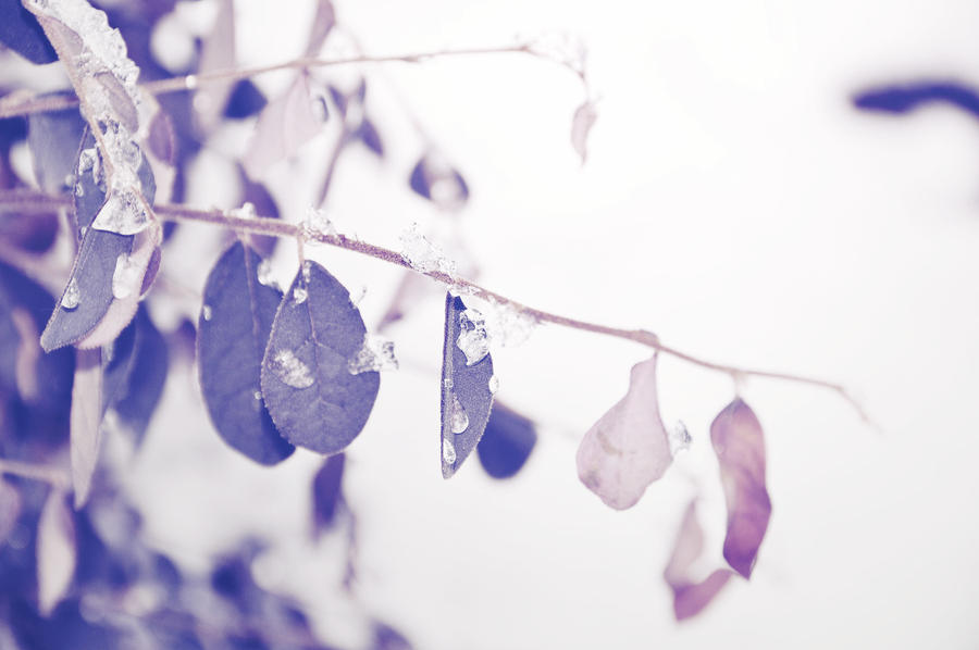 Leaves and Ice wallpaper > Leaves and Ice Papel de parede > Leaves and Ice Fondos