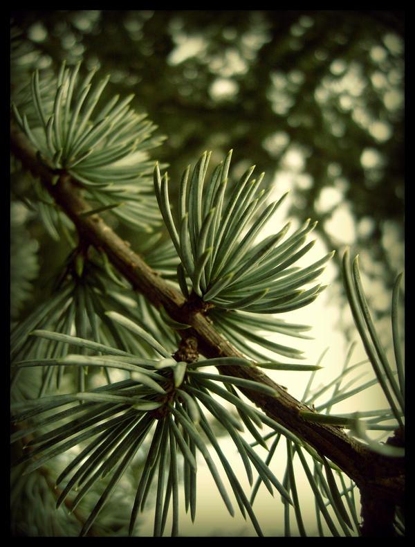 Branch by Branch by Dawns-Envy