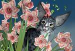 Pink Daffodils and Catula