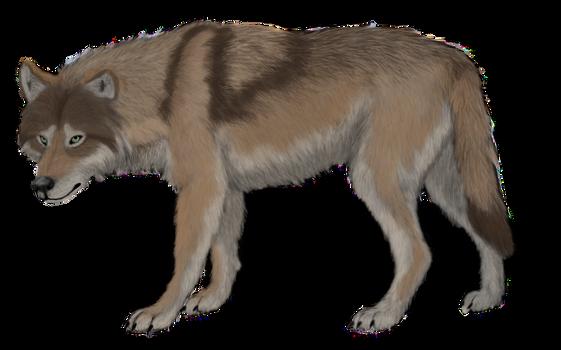 Canis lupus maximus