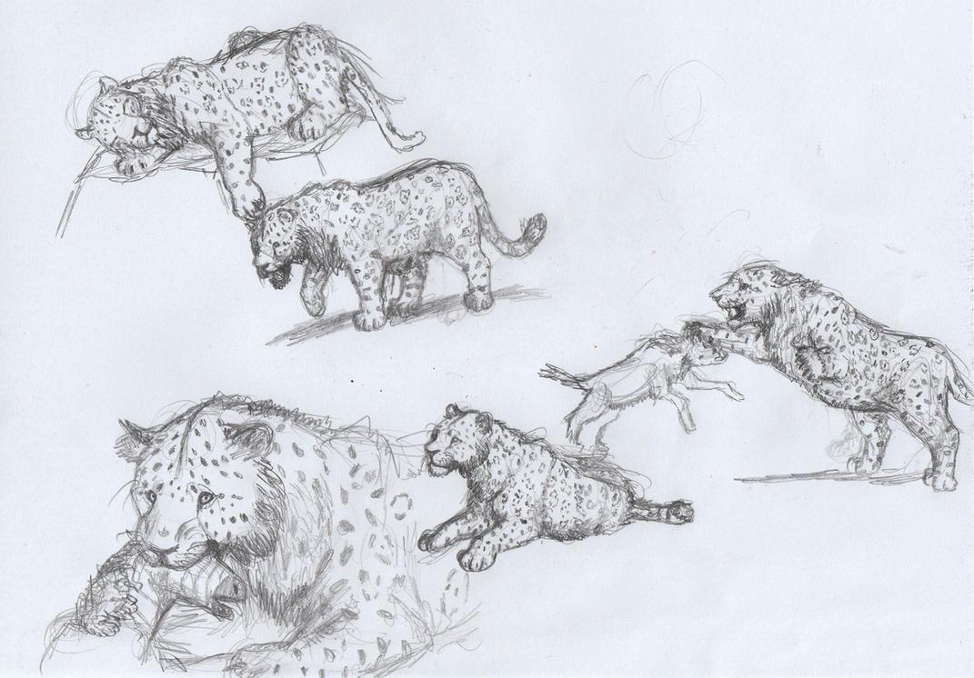 Panthera onca mesembrina sketches by AnonymousLlama428