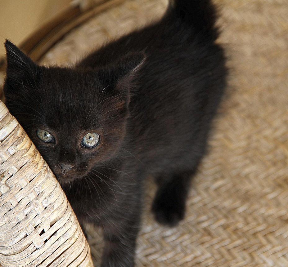 Meow by nawichok