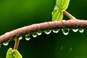 Wicked Rain by EyeDance