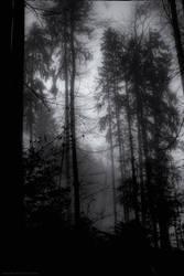 When the green dark forest ... by EyeDance