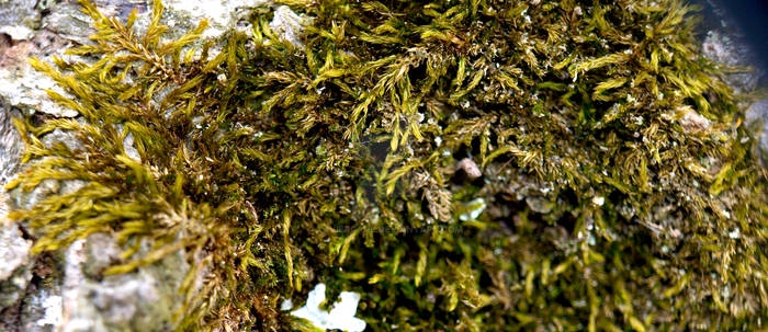 Cold Moss