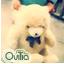 Bear by Ovilia1024