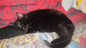Jasper Having A Nap
