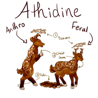 Athidine Species Guide