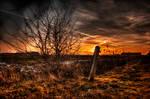 Orange Trails 2