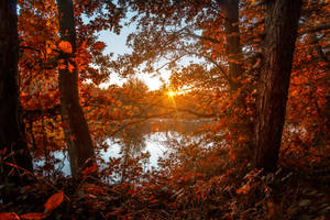 Lost Autumn by t-3-t