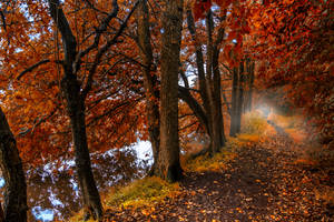 Fall by t-3-t