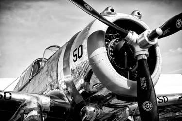 Hawk by Daniel-Wales-Images