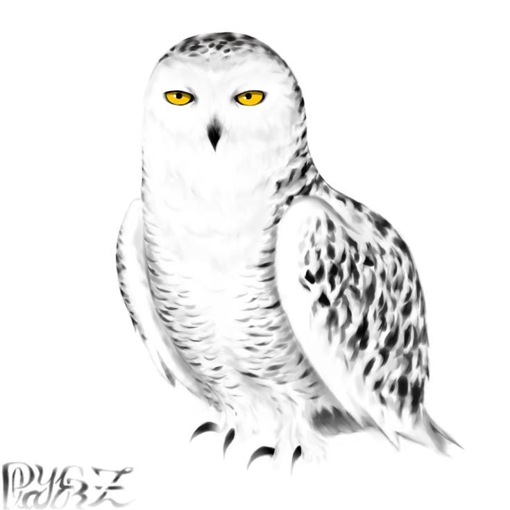 Snowy Owl by PlayerZed