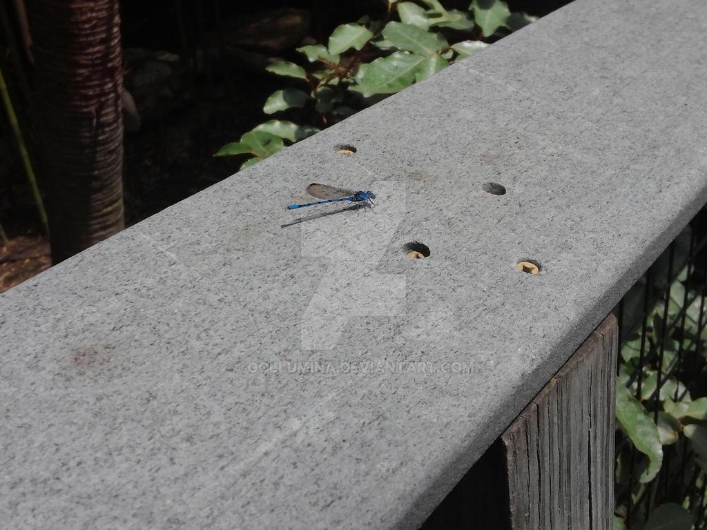 Blue Dragonfly by Gollumina