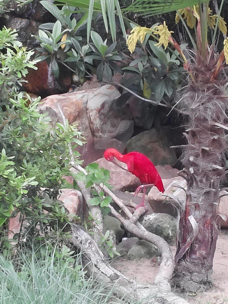 Scarlet Ibis by Gollumina