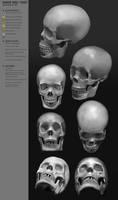 HumanHead Study CW27