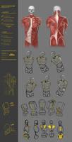 Simplify human body study 43CW