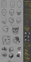 CW05 Head-Skull Study