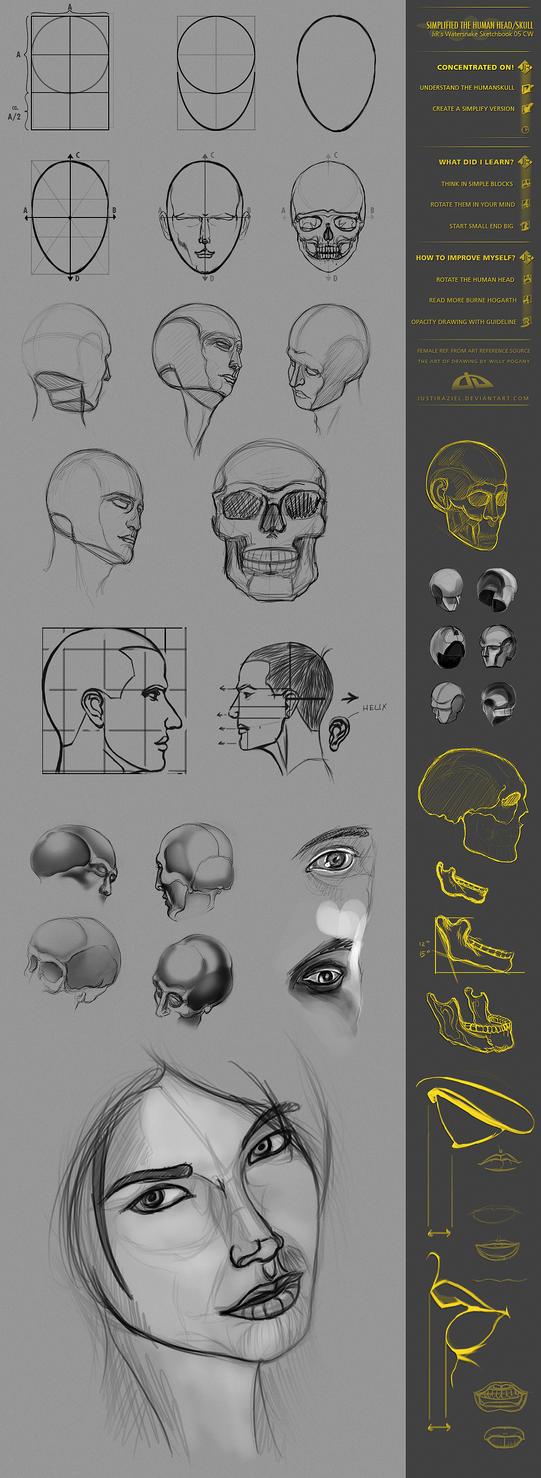 CW05 Head-Skull Study by JustIRaziel