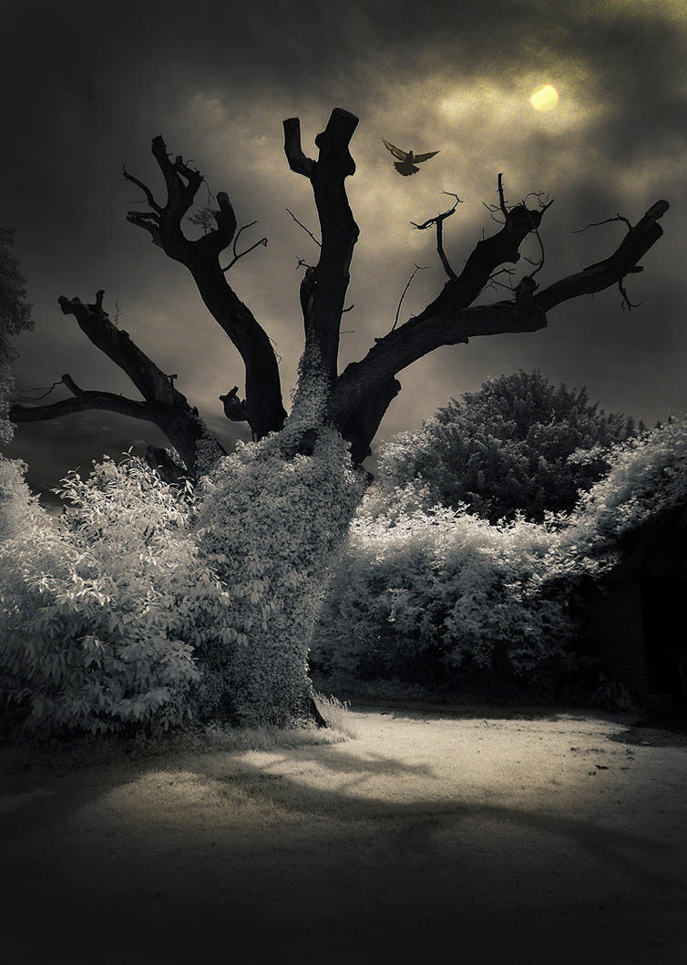 Tree by DaveWheeler