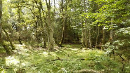 Svinkloev Wood, Denmark by weblord070