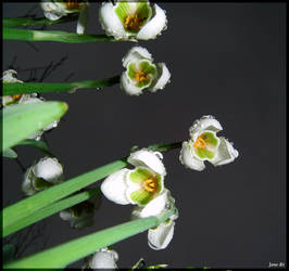 Underneath the Snowdrops 2 by Jane-Rt