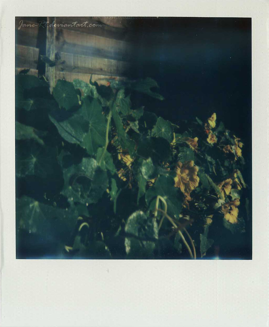 Polaroid - Spot The Caterpillar by Jane-Rt