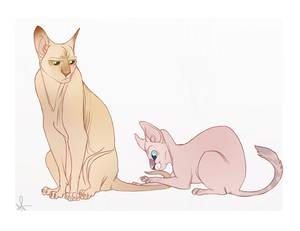 Nakey Kitties