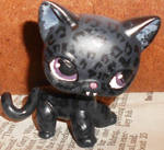 Amber the Black Jaguar