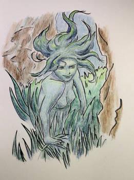 Seaweed creeper