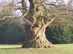 - Tree - by Peoch