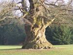 - Tree -