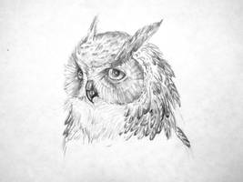 Owl by FeatheredDiva