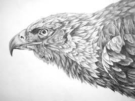 Eagle 2 by FeatheredDiva