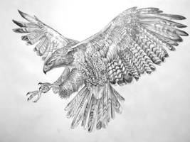 Eagle 3 by FeatheredDiva