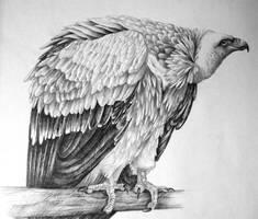 Vulture by FeatheredDiva