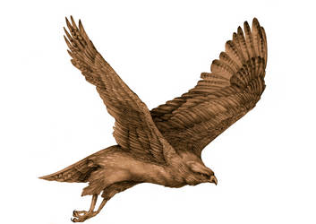 eagle by FeatheredDiva