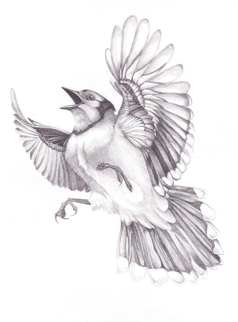 Eurasian jay by FeatheredDiva