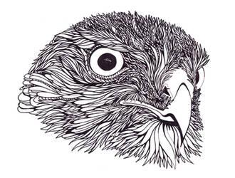 Hawk by FeatheredDiva