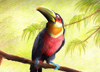 red-breasted toucan by FeatheredDiva