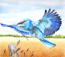 Blue hunter by FeatheredDiva