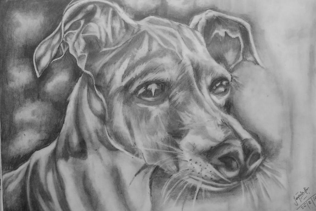 animal by joyeeta1999