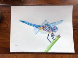Prismacolor dragonfly