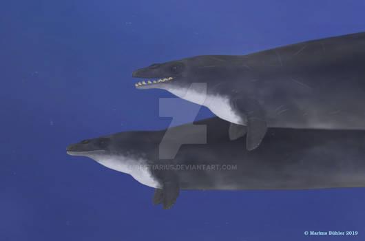 A pair of Basilosaurs