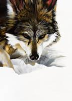 Wolf by rekmac