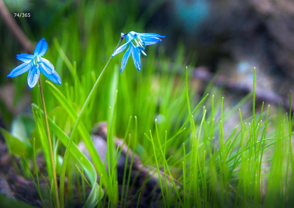 Flowers by aseneta