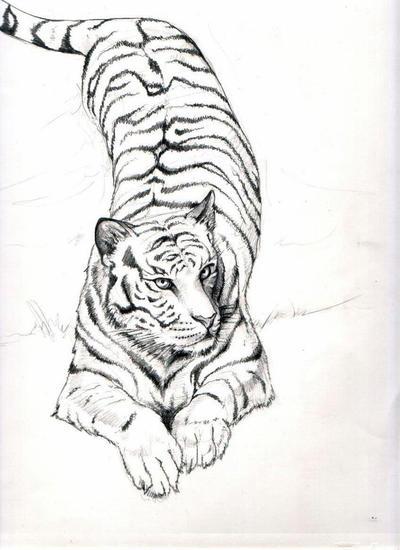 Tiger walking downhill tattoo - photo#11