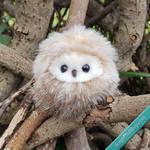 Tiny owl Abigail